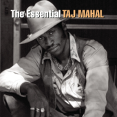 The Essential Taj Mahal