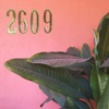 2609 - EP