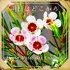 Ashita wa Dokokara (Warotenka) [music box] - Single ジャケット写真