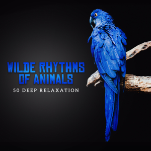 Zen Soothing Sounds of Nature - Wilde Rhythms of Animals: 50 Tracks, Amazing Sounds to Create Your Private Jungle at Home, Zen Spa & Deep Relaxation