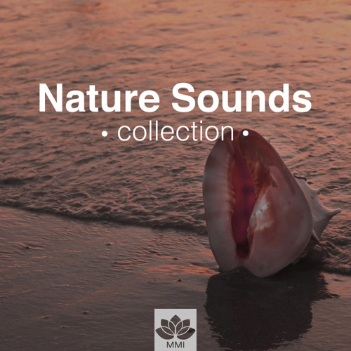 DOWNLOAD MP3: Tranquil Music Sound of Nature - Nature Sounds