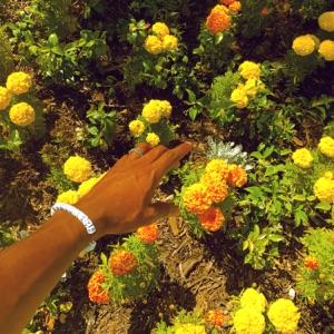 Peach Fuzz - Single Mp3 Download