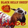 Black Belly Sheep