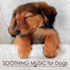 Pet Care Music Therapy - Soothing Music for Dogs - Calming and Relaxing Music for Putting a Dog to Sleep, Pet Therapy  artwork
