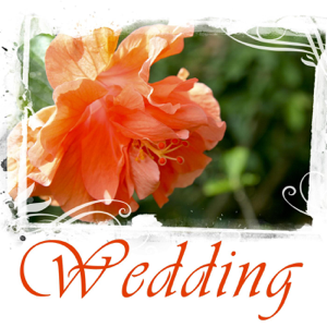 Earth Essence - Wedding Day