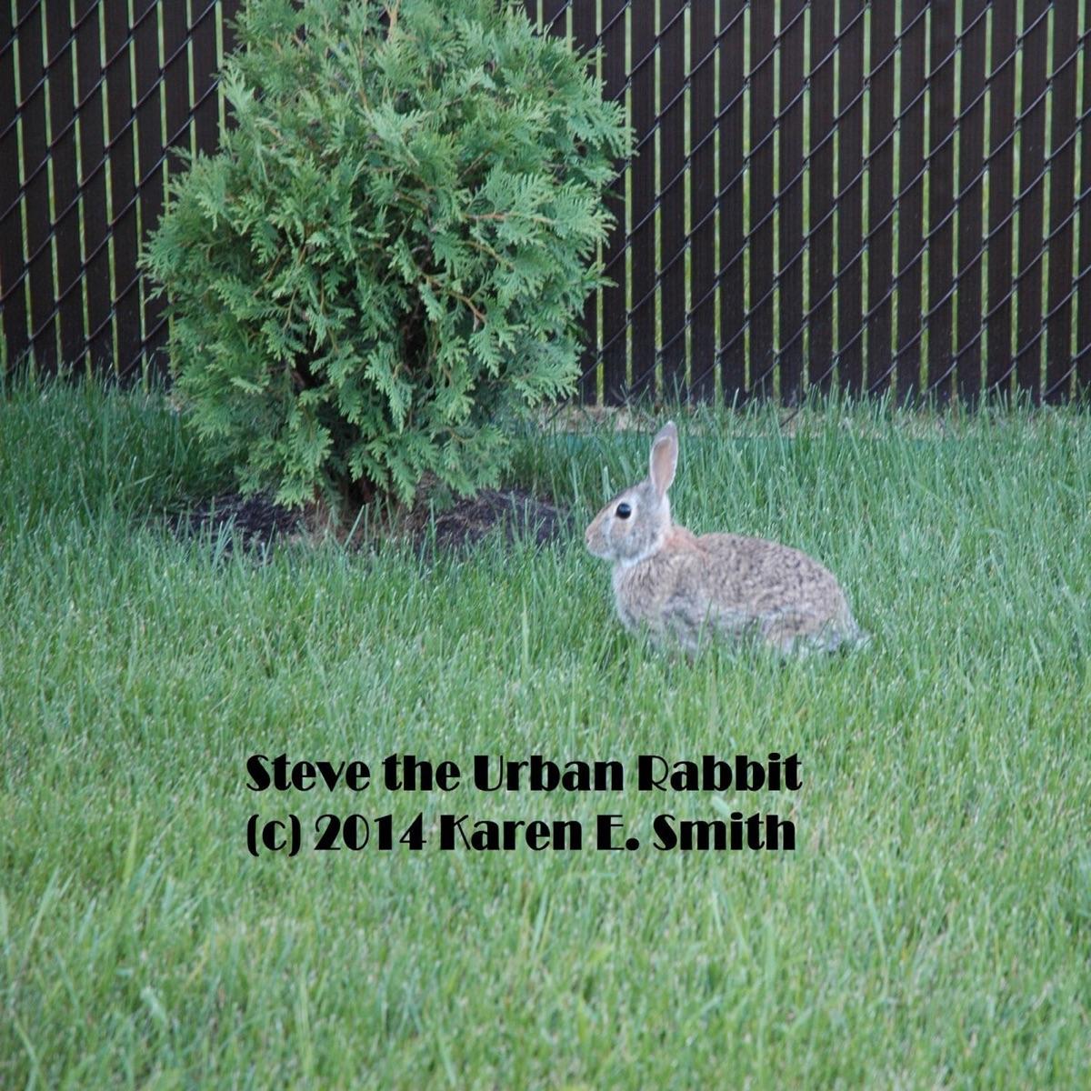 Steve the Urban Rabbit The Song - Single Karen E Smith CD cover