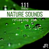 Nature Sounds (Piano & Birds)