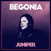 Begonia - Juniper