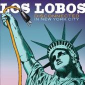 Los Lobos - Gotta Let You Know