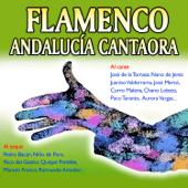 Flamenco. Andalucía Cantaora