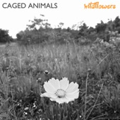 Caged Animals - Wildflowers