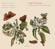 Enrico Gatti, Antonio Mosca & Giorgio Tabacco - Perle del Piemonte: Violin Music in 18th-Century Italy