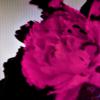 John Legend - All of Me (Live) ilustración