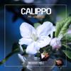 Calippo - Mr. Love You artwork
