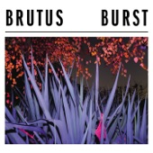 Brutus - Baby Seal