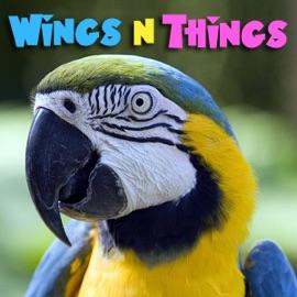 Wingsnthings Birds Parrots As Pets All About Pet Birds Pets Animals On Pet Life Radio Petliferadio Com