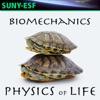 Biomechanics - Physics of Life