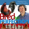 Bred to Perfection artwork