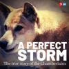 A Perfect Storm: The True Story of The Chamberlains - Seven West Media
