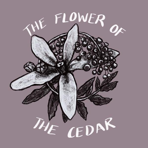 The Flower of the Cedar