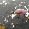 Birdies artwork