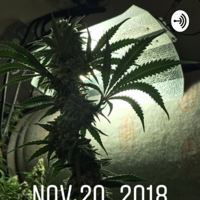 Growing Cannabis with 505growlabs podcast