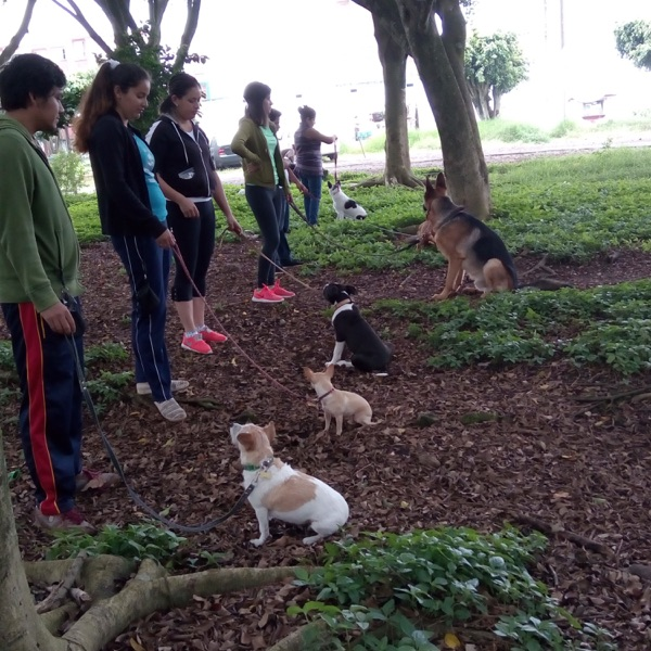 Adiestramiento canino deportivo De xalapa