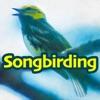 Songbirding artwork