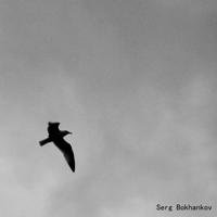 Serg Bokhankov podcast