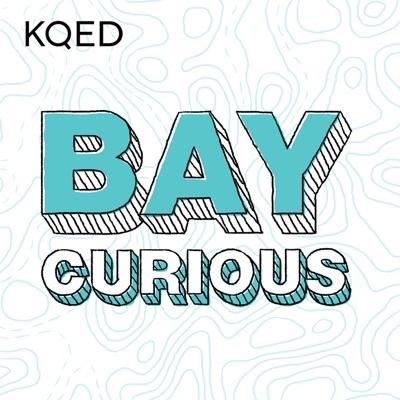 Bay Curious