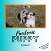 Pandemic Puppy Podcast artwork