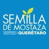 Semilla de Mostaza Querétaro artwork