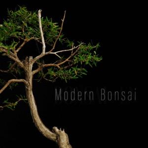Modern Bonsai