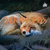 DERPY_F0X TV artwork