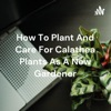 How To Plant And Care For Calathea Plants As A New Gardener artwork
