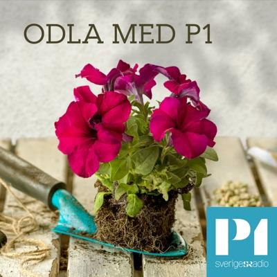 Odla med P1:Sveriges Radio