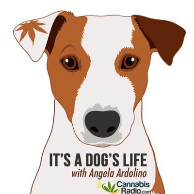 It's A Dog's Life With Angela Ardolino
