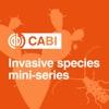 CABI Podcast artwork