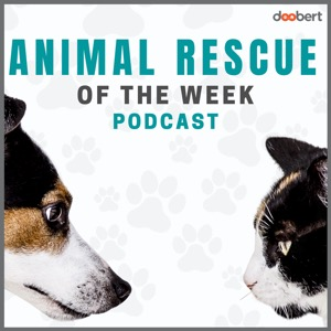 Animal Rescue of the week