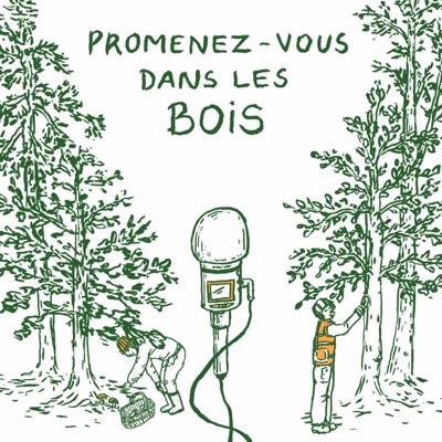 Promenez-vous dans les bois