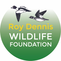 Roy Dennis Wildlife Foundation: hands-on conservation podcast