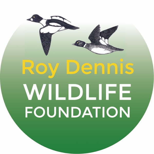Roy Dennis Wildlife Foundation: hands-on conservation