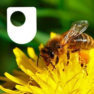 Ecosystems: living communities - for iPad/Mac/PC