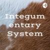 Integumentary System artwork