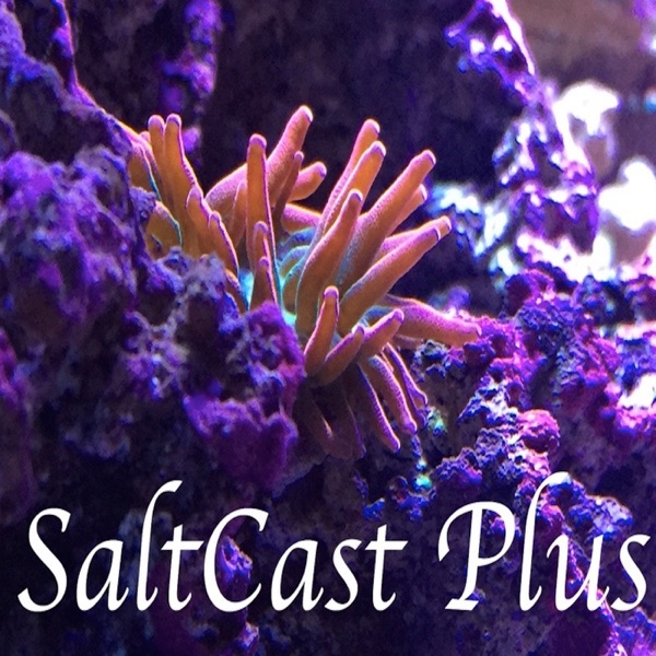 SaltCast Plus