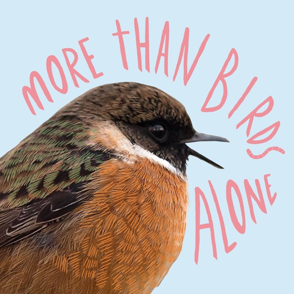 More Than Birds Alone