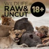 Wildlife: Raw & Uncut (HD)