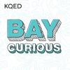 Bay Curious artwork