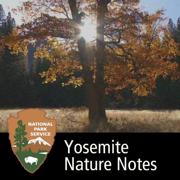 Yosemite Nature Notes
