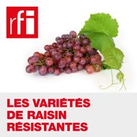 Les variétés de raisin résistantes podcast